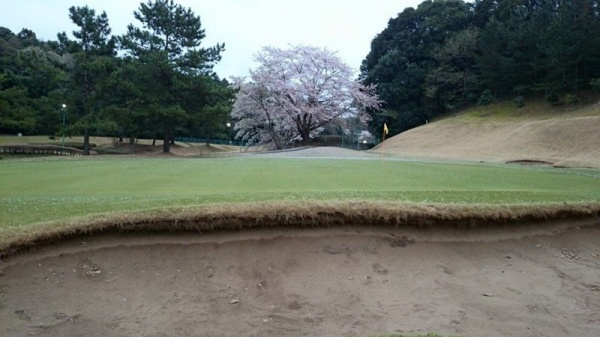グリーンの砂と一緒にカラーの砂も払ってしまった。
