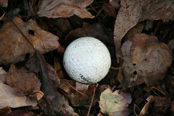 見つかったと思って拾い上げた暫定球