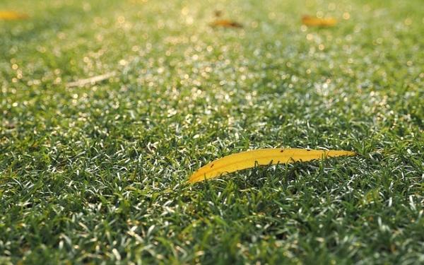 grass-1081313_640