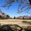 【絶景】お花見ゴルフ(玉村ゴルフ場)
